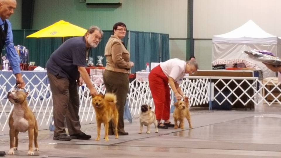 Middle Georgia Kennel Club